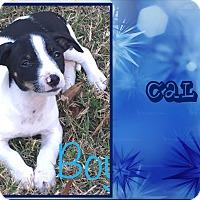 Adopt A Pet :: Cal - Ringwood, NJ