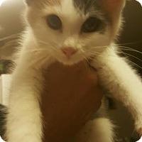 Adopt A Pet :: Smurfette - Lancaster, CA