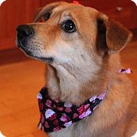 Adopt A Pet :: Goldie - Mt. Prospect, IL