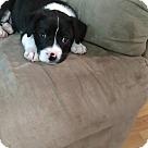 Adopt A Pet :: Riot