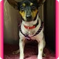 Adopt A Pet :: Mabel (In New England) - Brattleboro, VT