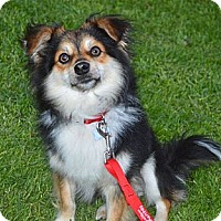 Adopt A Pet :: Max - Los Angeles, CA