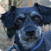 Adopt A Pet :: Chips - Canoga Park, CA