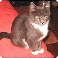 Adopt A Pet :: Cisco - Colmar, PA