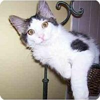Adopt A Pet :: Maxi - Arlington, VA