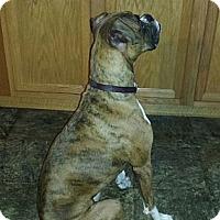 Adopt A Pet :: Maggie Mae - Dayton, OH