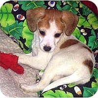 Adopt A Pet :: Racine - Novi, MI