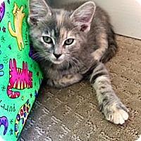 Adopt A Pet :: Pansy - St. Louis, MO