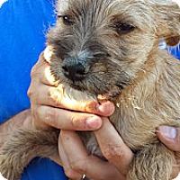 Adopt A Pet :: Henry - Perris, CA