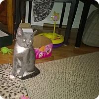 Adopt A Pet :: Nevin - Speonk, NY