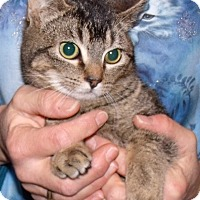 Adopt A Pet :: Bunny - Centralia, WA