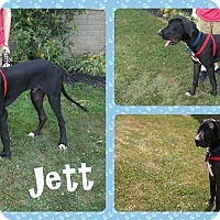 Adopt A Pet :: Jett - DOVER, OH