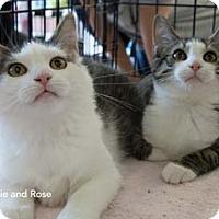 Adopt A Pet :: Cassie - Merrifield, VA