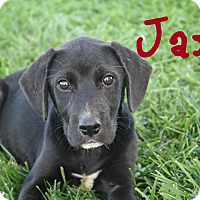 Adopt A Pet :: Jax - Brazil, IN