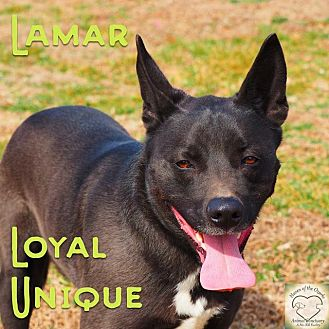 Shepherd (Unknown Type)/Border Collie Mix Dog for adoption in Washburn, Missouri - Lamar