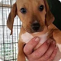 Adopt A Pet :: Jubilee - Gainesville, FL