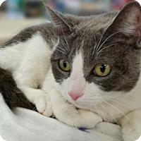 Adopt A Pet :: Maxine - Staten Island, NY