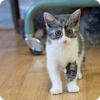 Adopt A Pet :: Speck - Marietta, GA
