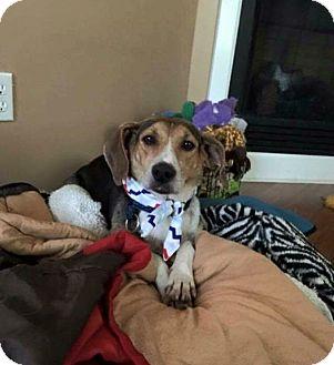 Hound (Unknown Type) Mix Dog for adoption in Hampton, Virginia - Joy