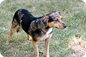 Beagle Mix Dog for adoption in Norfolk, Virginia - MARTINA