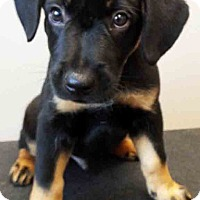 Adopt A Pet :: ADOPTED!!!   Timmy - Shorewood, IL