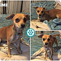 Adopt A Pet :: Demi - Kimberton, PA