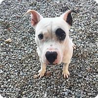 Adopt A Pet :: Winzel - Greensboro, NC