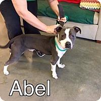 Adopt A Pet :: Abel-URGENT - Allen town, PA