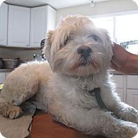 Adopt A Pet :: Roscoe - Monroe, CT