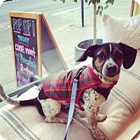 Adopt A Pet :: Brandon Victor Dixon - Jersey City, NJ