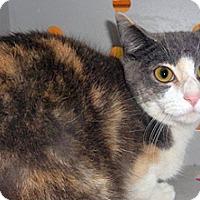 Adopt A Pet :: 334696 - Wildomar, CA