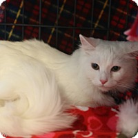 Adopt A Pet :: Moppey - Olive Branch, MS