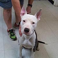 Adopt A Pet :: Ryanne - Glendale, AZ