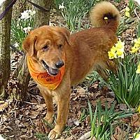 Adopt A Pet :: OMG Dog - Capon Bridge, WV