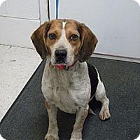 Adopt A Pet :: Wendall - Lancaster, VA