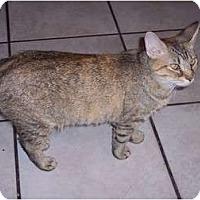 Adopt A Pet :: Clementine - Delmont, PA