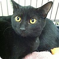 Adopt A Pet :: Jax - Riverhead, NY