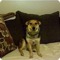 Adopt A Pet :: Harley - Murfreesboro, TN