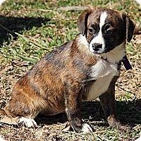 Adopt A Pet :: Agatha - Staunton, VA