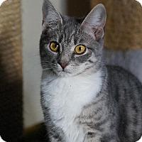 Adopt A Pet :: Etta - Philadelphia, PA