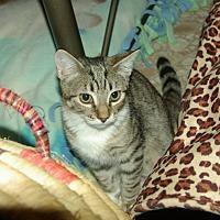 Adopt A Pet :: Chester (Chessie) - Ocala, FL