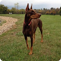Adopt A Pet :: Jasper--adopted!! - New Richmond, OH