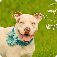 Adopt A Pet :: Abby Rose - Pearland, TX