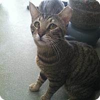 Adopt A Pet :: Buck - Westminster, CA