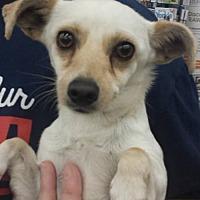 Adopt A Pet :: Angelo - Fresno, CA