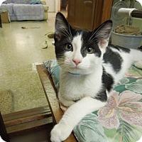 Adopt A Pet :: Kent - Medina, OH