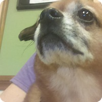 Adopt A Pet :: Bob - Lebanon, CT
