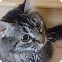 Adopt A Pet :: Buttermilk - Denver, CO