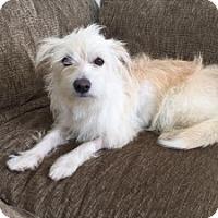 Adopt A Pet :: Lady Rosie - Rancho Santa Margarita, CA