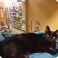 Adopt A Pet :: Miss Kitty - Scottsdale, AZ
